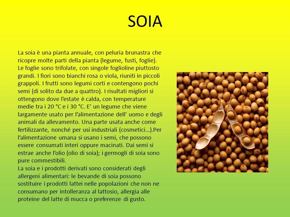 SOIA La soia è una pianta annuale, con peluria brunastra che ricopre molte parti della pianta (legume, fusti, foglie).