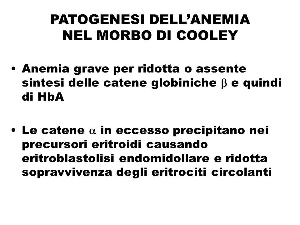 Anemia grave per ridotta o assente sintesi delle catene globiniche  e quindi di HbA Le catene  in eccesso precipitano nei precursori eritroidi causa