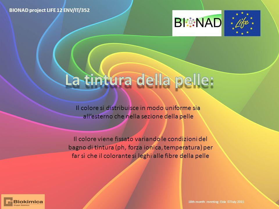 BIONAD project LIFE 12 ENV/IT/352 Il colore si distribuisce in modo uniforme sia all'esterno che nella sezione della pelle Il colore viene fissato var