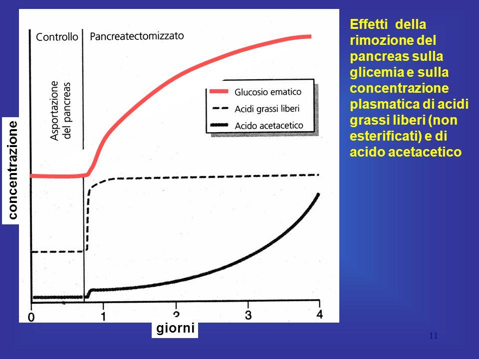 11 giorni concentrazione Effetti della rimozione del pancreas sulla glicemia e sulla concentrazione plasmatica di acidi grassi liberi (non esterificati) e di acido acetacetico