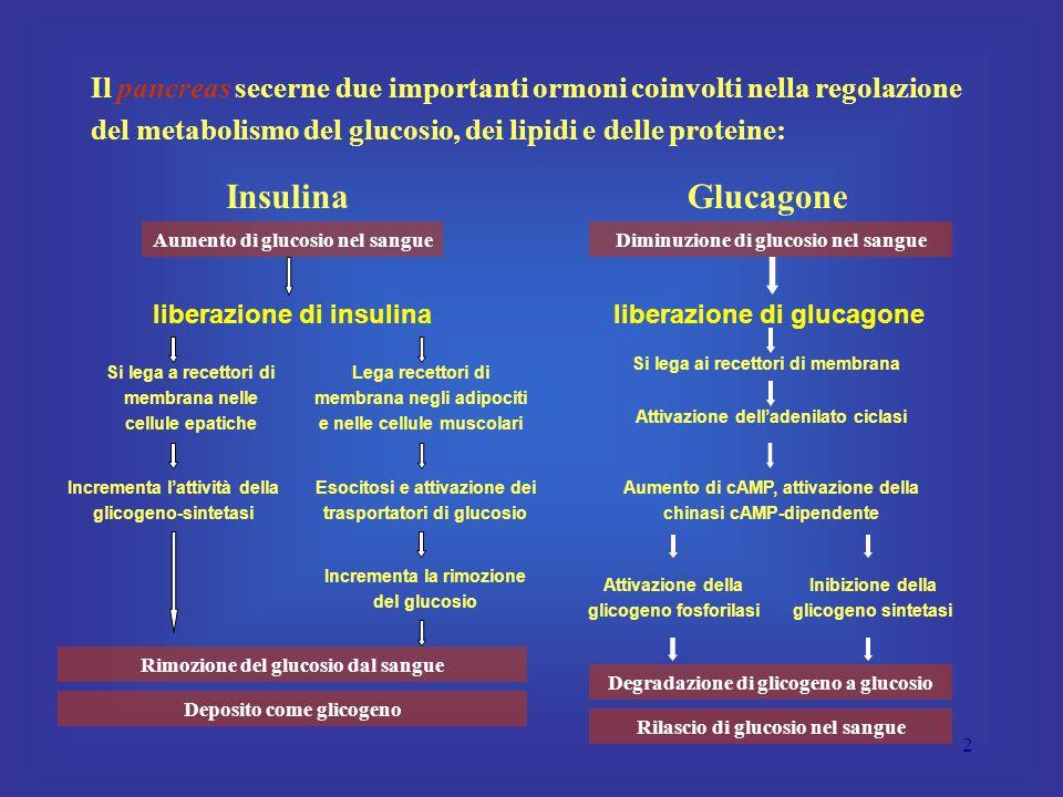 43 Effetto stimolante dell'attività fisica L'aumento dell'attività fisica induce l'aumento della secrezione del glucagone, anche se non se ne conosce la causa questo effetto ha il vantaggio di impedire l'abbassamento della glicemia durante lo sforzo muscolare