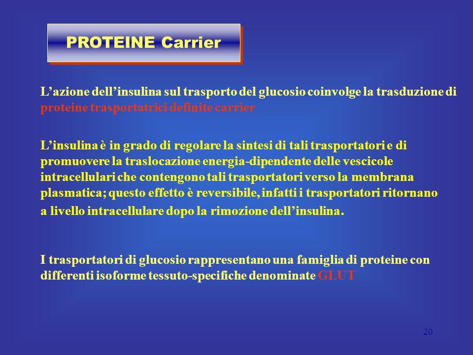 20 L'azione dell'insulina sul trasporto del glucosio coinvolge la trasduzione di proteine trasportatrici definite carrier I trasportatori di glucosio rappresentano una famiglia di proteine con differenti isoforme tessuto-specifiche denominate GLUT L'insulina è in grado di regolare la sintesi di tali trasportatori e di promuovere la traslocazione energia-dipendente delle vescicole intracellulari che contengono tali trasportatori verso la membrana plasmatica; questo effetto è reversibile, infatti i trasportatori ritornano a livello intracellulare dopo la rimozione dell'insulina.