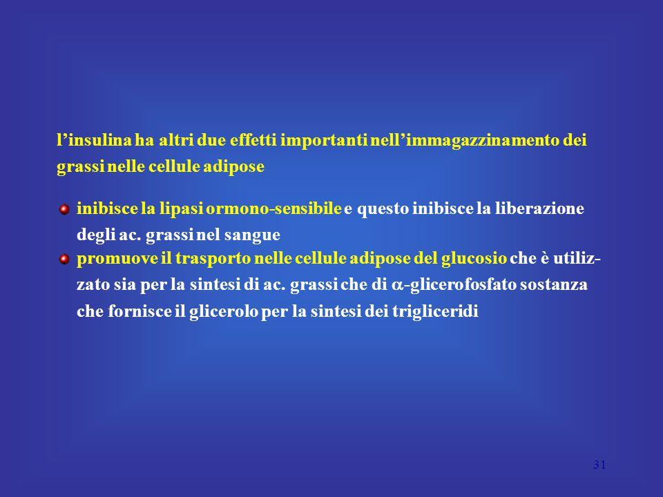 31 l'insulina ha altri due effetti importanti nell'immagazzinamento dei grassi nelle cellule adipose inibisce la lipasi ormono-sensibile e questo inibisce la liberazione degli ac.