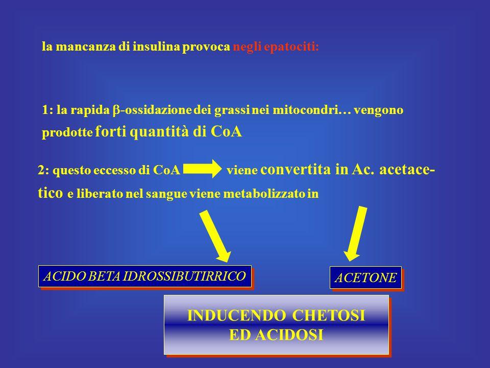 la mancanza di insulina provoca negli epatociti: 1: la rapida  -ossidazione dei grassi nei mitocondri… vengono prodotte forti quantità di CoA 2: questo eccesso di CoA viene convertita in Ac.