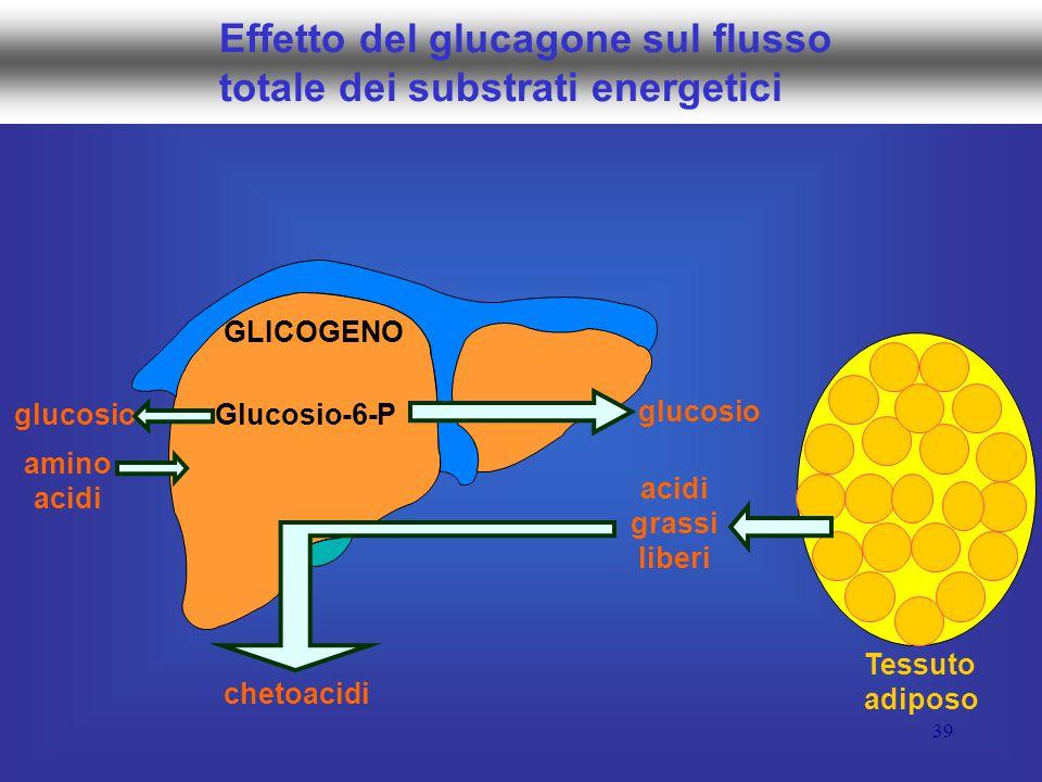 39 Effetto del glucagone sul flusso totale dei substrati energetici Glucosio-6-P GLICOGENO glucosio amino acidi grassi liberi chetoacidi Tessuto adiposo