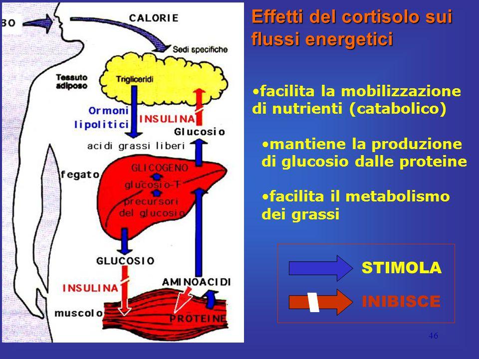 46 Effetti del cortisolo sui flussi energetici facilita la mobilizzazione di nutrienti (catabolico) mantiene la produzione di glucosio dalle proteine facilita il metabolismo dei grassi STIMOLA INIBISCE