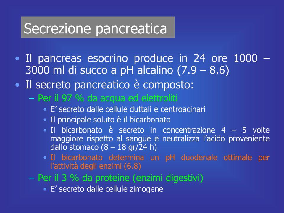 36 come l'insulina il glucagone è un grosso polipeptide PM 3490 costituito da una catena di 29 Aa Diminuzione di glucosio nel sangue liberazione di glucagone Si lega ai recettori di membrana Aumento di cAMP, attivazione della chinasi cAMP-dipendente Attivazione della glicogeno fosforilasi Inibizione della glicogeno sintetasi Degradazione di glicogeno a glucosio Attivazione dell'adenilato ciclasi Rilascio di glucosio nel sangue Glucagone GLUCAGONE E LE SUE FUNZIONI il glucagone, secreto dalle cellule  ha effetti diametralmente opposti a quelli dell'insulina l'effetto principale è quello di far aumentare il tasso glicemico per le sue proprietà di aumentare la glicemia viene indicato come fattore IPERGLICEMIZZANTE