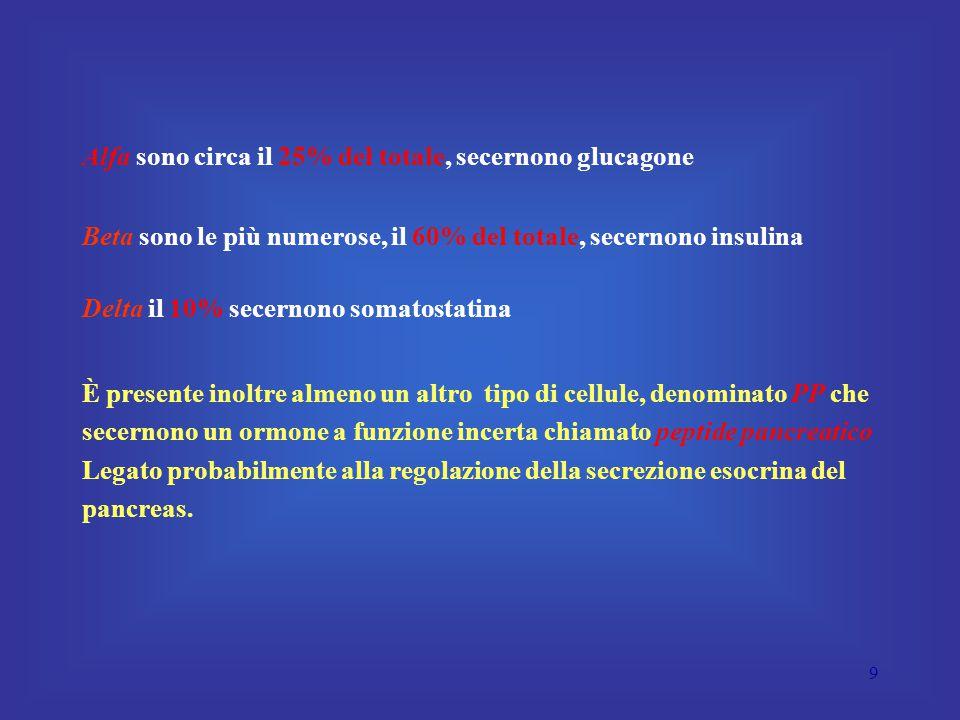 9 Alfa sono circa il 25% del totale, secernono glucagone Beta sono le più numerose, il 60% del totale, secernono insulina Delta il 10% secernono somatostatina È presente inoltre almeno un altro tipo di cellule, denominato PP che secernono un ormone a funzione incerta chiamato peptide pancreatico Legato probabilmente alla regolazione della secrezione esocrina del pancreas.