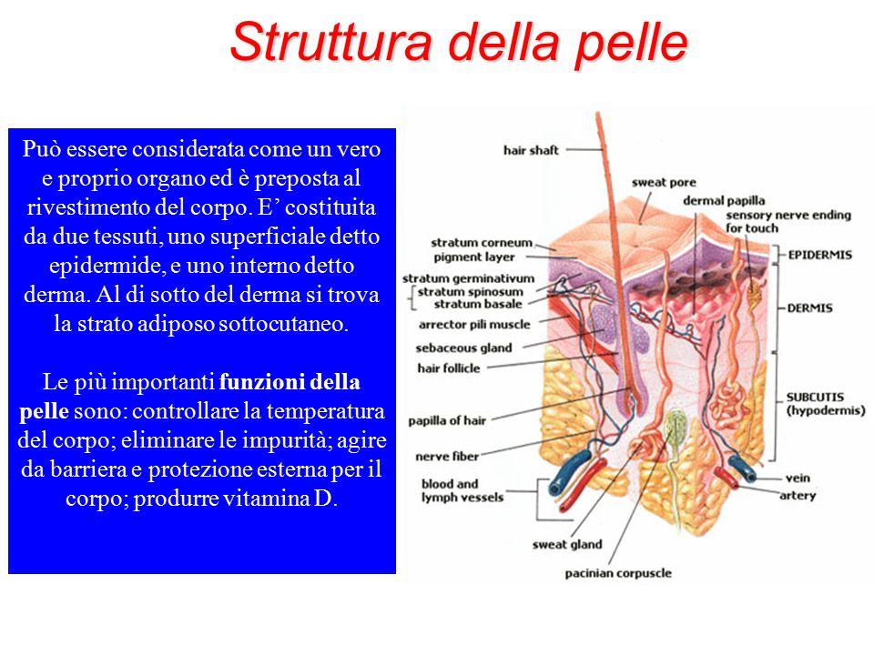 Struttura della pelle Può essere considerata come un vero e proprio organo ed è preposta al rivestimento del corpo. E' costituita da due tessuti, uno