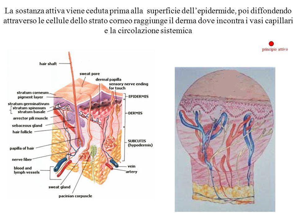 principio attivo La sostanza attiva viene ceduta prima alla superficie dell'epidermide, poi diffondendo attraverso le cellule dello strato corneo ragg