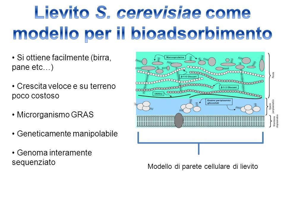 STRATEGIA DI CATTURA DEL LANTANIO TRAMITE PARETE CELLULARE DI S.