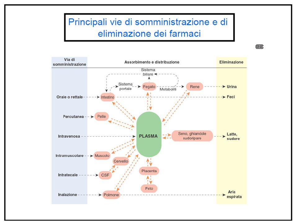 Sostanze ausiliarie Solubilizzanti (come i tensioattivi o i polimeri) Anestetici locali (come la lidocaina) Stabilizzanti chimici (come gli antiossidanti, i gas inerti, gli agenti chelanti e i tamponi) Stabilizzanti microbiologici (come i batteriostatici) agenti antimicrobici Gli agenti antimicrobici sono ammessi per i prodotti multidose, in concentrazioni adeguate a prevenire la moltiplicazione di microrganismi eventualmente introdotti al momento del primo utilizzo.