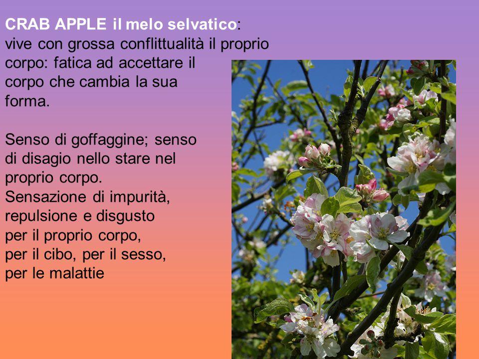 CRAB APPLE il melo selvatico: vive con grossa conflittualità il proprio corpo: fatica ad accettare il corpo che cambia la sua forma. Senso di goffaggi