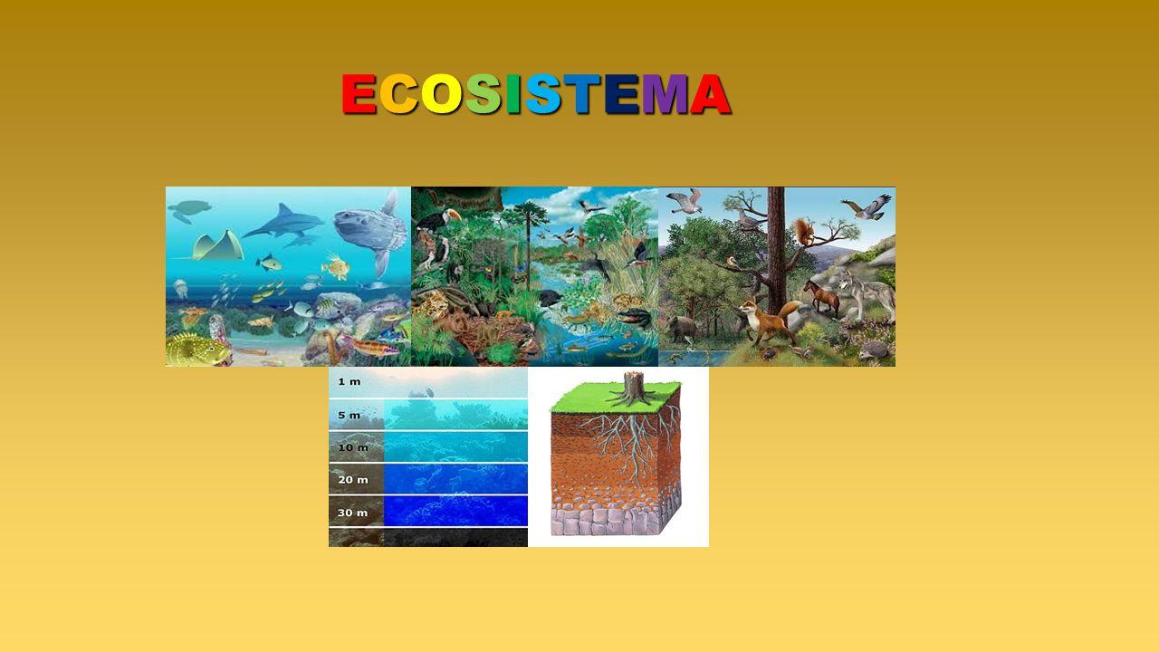 ECOSISTEMAECOSISTEMAECOSISTEMAECOSISTEMA