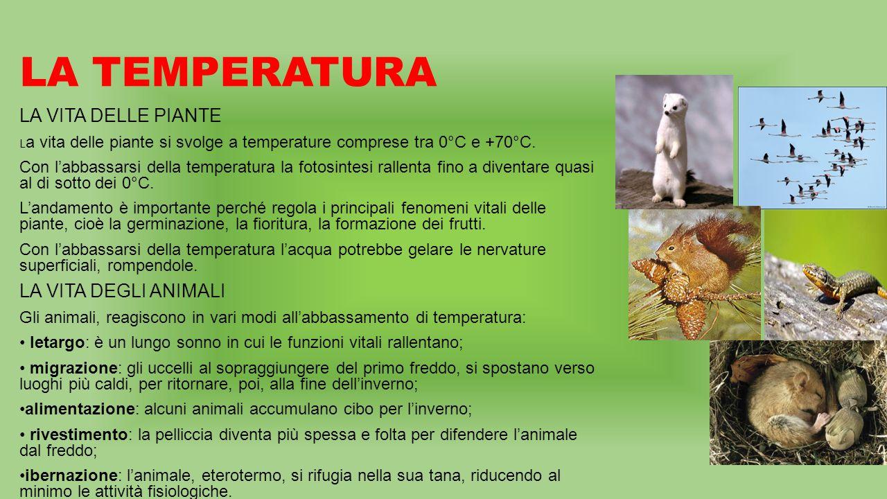 LA TEMPERATURA LA VITA DELLE PIANTE L a vita delle piante si svolge a temperature comprese tra 0°C e +70°C.
