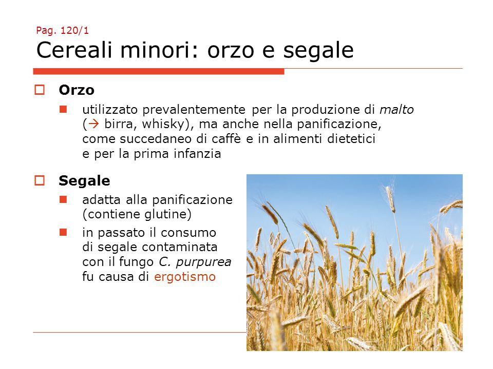 Pag. 120/1 Cereali minori: orzo e segale  Orzo utilizzato prevalentemente per la produzione di malto (  birra, whisky), ma anche nella panificazione