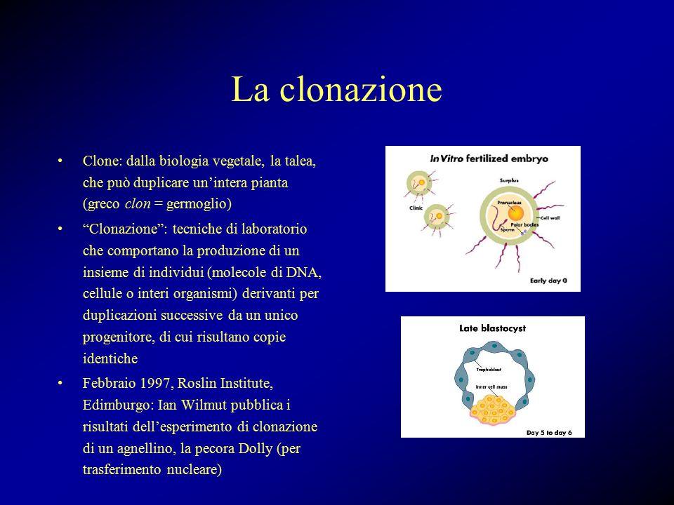 La clonazione Clone: dalla biologia vegetale, la talea, che può duplicare un'intera pianta (greco clon = germoglio) Clonazione : tecniche di laboratorio che comportano la produzione di un insieme di individui (molecole di DNA, cellule o interi organismi) derivanti per duplicazioni successive da un unico progenitore, di cui risultano copie identiche Febbraio 1997, Roslin Institute, Edimburgo: Ian Wilmut pubblica i risultati dell'esperimento di clonazione di un agnellino, la pecora Dolly (per trasferimento nucleare)
