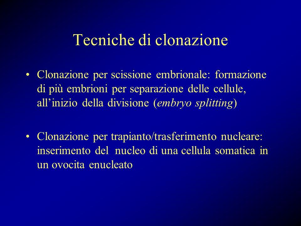 Tecniche di clonazione Clonazione per scissione embrionale: formazione di più embrioni per separazione delle cellule, all'inizio della divisione (embryo splitting) Clonazione per trapianto/trasferimento nucleare: inserimento del nucleo di una cellula somatica in un ovocita enucleato
