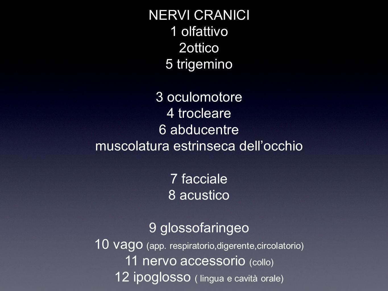 NERVI CRANICI 1 olfattivo 2ottico 5 trigemino 3 oculomotore 4 trocleare 6 abducentre muscolatura estrinseca dell'occhio 7 facciale 8 acustico 9 glosso