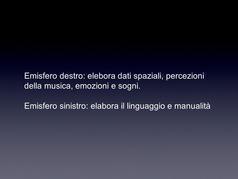 Emisfero destro: elebora dati spaziali, percezioni della musica, emozioni e sogni. Emisfero sinistro: elabora il linguaggio e manualità