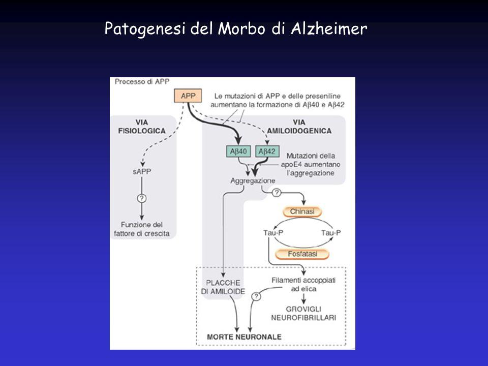 Patogenesi del Morbo di Alzheimer