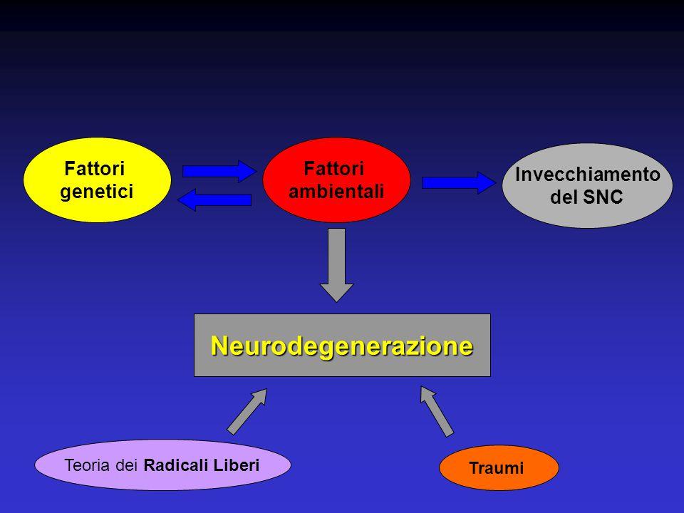 Fattori ambientali Fattori genetici Invecchiamento del SNC Neurodegenerazione Traumi Teoria dei Radicali Liberi