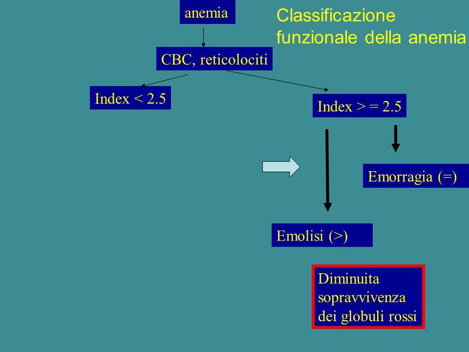 anemia CBC, reticolociti Index < 2.5 Index > = 2.5 Emolisi (>) Diminuita sopravvivenza dei globuli rossi Classificazione funzionale della anemia Emorr
