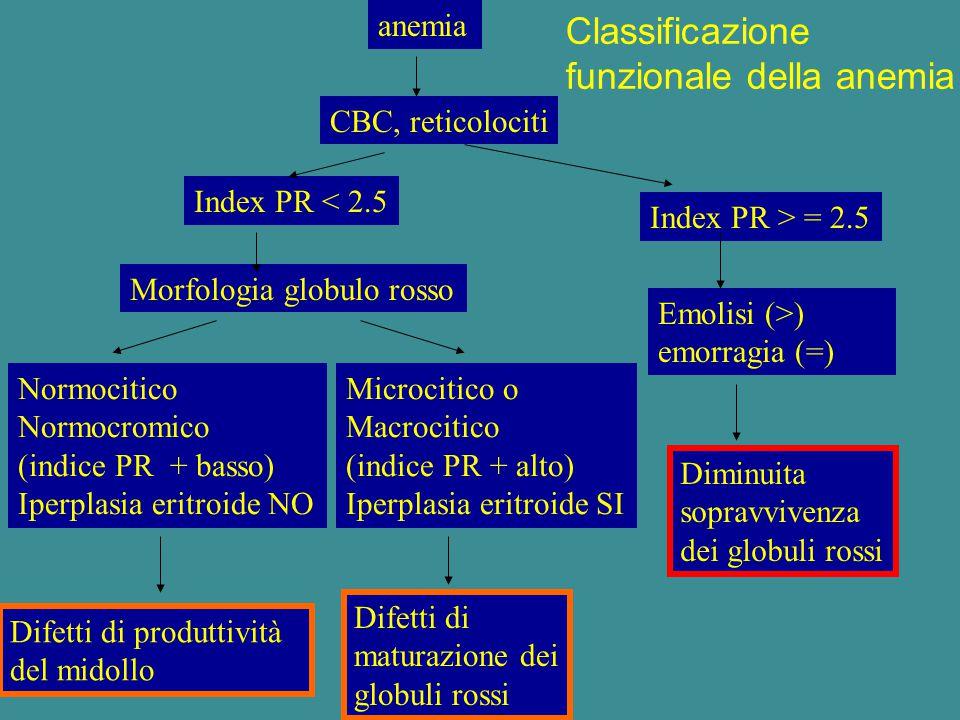 anemia CBC, reticolociti Index PR < 2.5 Index PR > = 2.5 Morfologia globulo rosso Emolisi (>) emorragia (=) Normocitico Normocromico (indice PR + bass