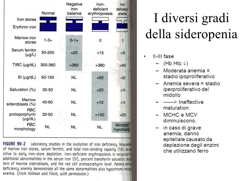 I diversi gradi della sideropenia II-III fase –(Hb Htc  ) –Moderata anemia = stadio ipoproliferativo –Anemia severa = stadio iperproliferativo del mi