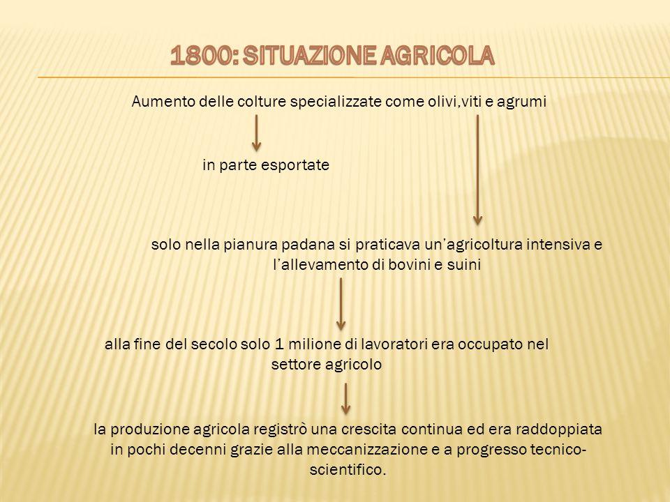 Aumento delle colture specializzate come olivi,viti e agrumi in parte esportate solo nella pianura padana si praticava un'agricoltura intensiva e l'al
