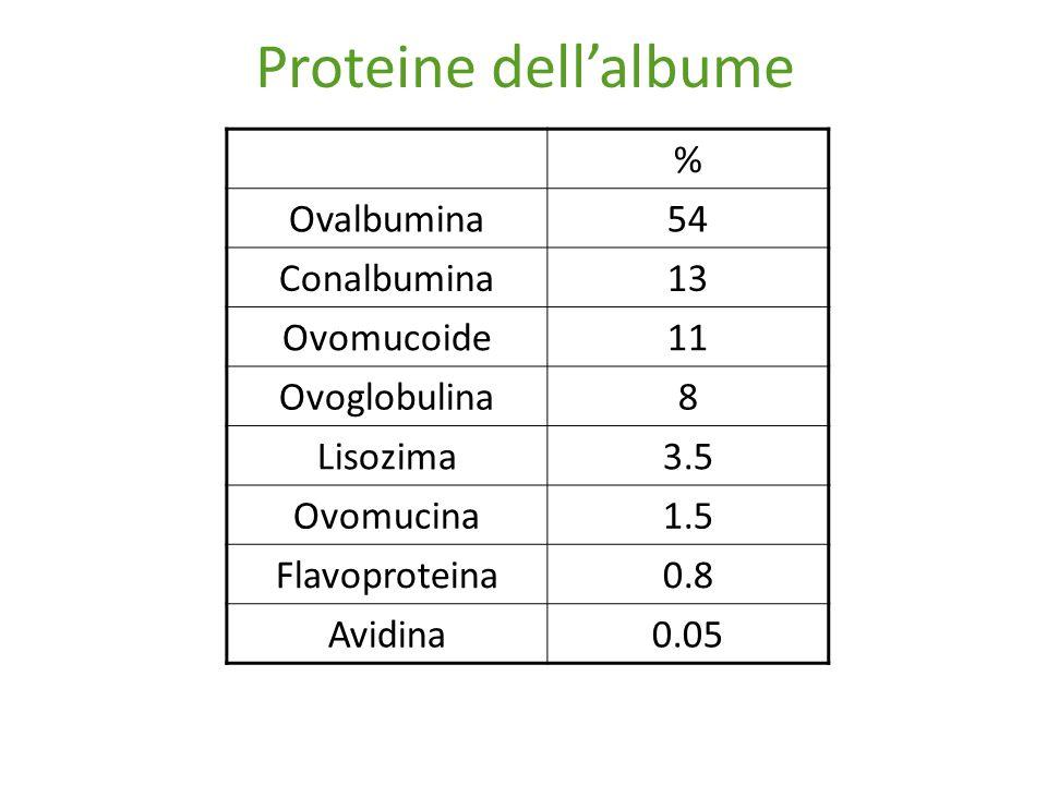 Proteine dell'albume % Ovalbumina54 Conalbumina13 Ovomucoide11 Ovoglobulina8 Lisozima3.5 Ovomucina1.5 Flavoproteina0.8 Avidina0.05