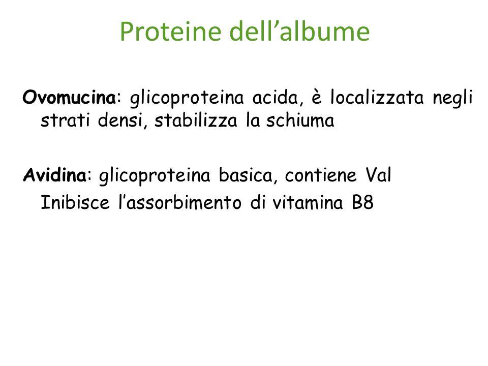 Proteine dell'albume Ovomucina: glicoproteina acida, è localizzata negli strati densi, stabilizza la schiuma Avidina: glicoproteina basica, contiene Val Inibisce l'assorbimento di vitamina B8