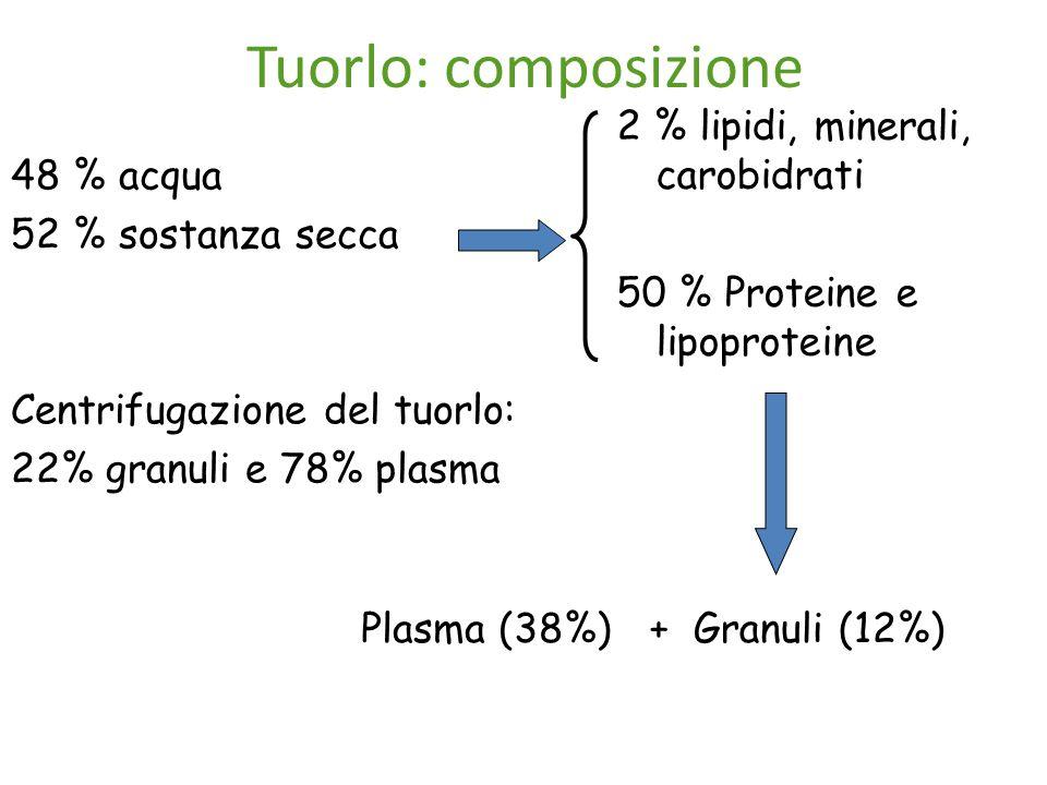 Tuorlo: composizione 48 % acqua 52 % sostanza secca Centrifugazione del tuorlo: 22% granuli e 78% plasma 2 % lipidi, minerali, carobidrati 50 % Proteine e lipoproteine Plasma (38%)+ Granuli (12%)