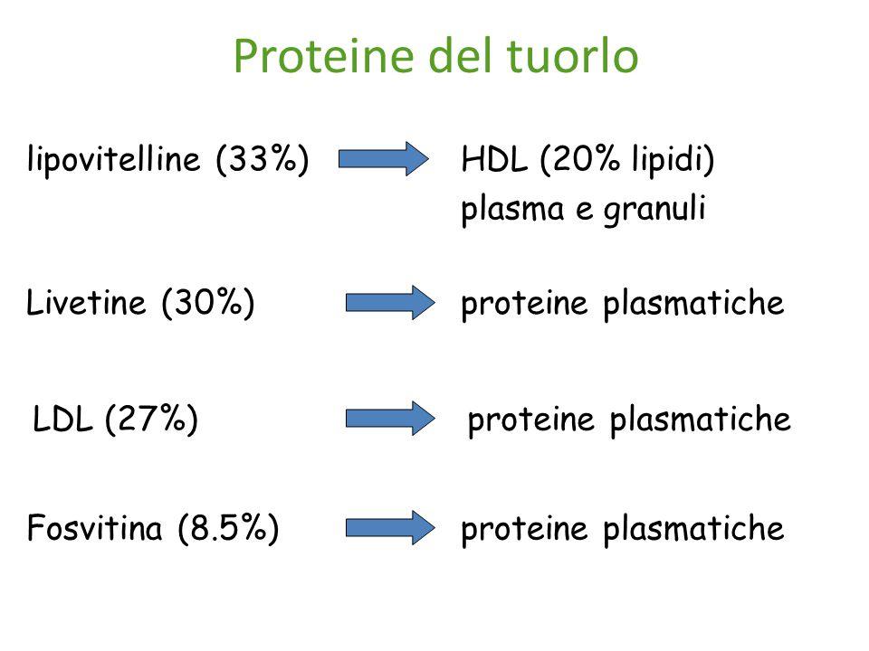 Proteine del tuorlo lipovitelline (33%) HDL (20% lipidi) plasma e granuli Livetine (30%) proteine plasmatiche LDL (27%)proteine plasmatiche Fosvitina