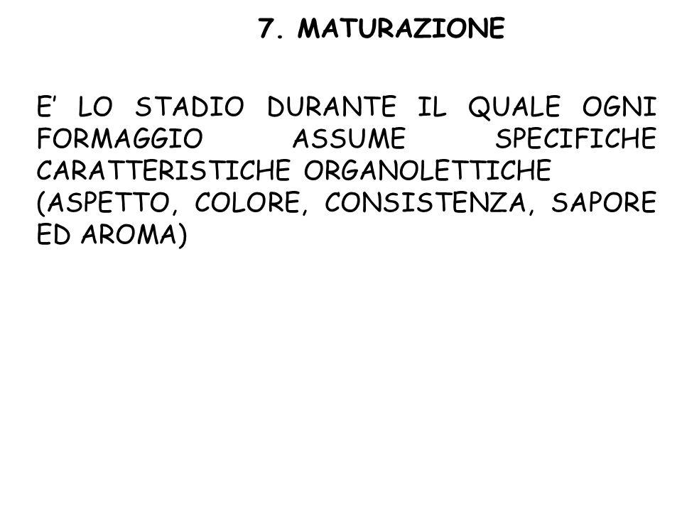 7. MATURAZIONE E' LO STADIO DURANTE IL QUALE OGNI FORMAGGIO ASSUME SPECIFICHE CARATTERISTICHE ORGANOLETTICHE (ASPETTO, COLORE, CONSISTENZA, SAPORE ED