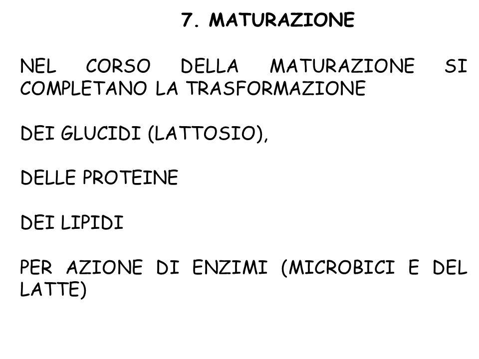 7. MATURAZIONE NEL CORSO DELLA MATURAZIONE SI COMPLETANO LA TRASFORMAZIONE DEI GLUCIDI (LATTOSIO), DELLE PROTEINE DEI LIPIDI PER AZIONE DI ENZIMI (MIC