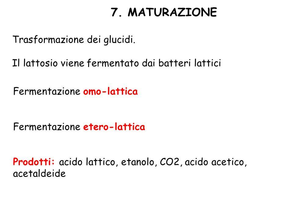 7. MATURAZIONE Trasformazione dei glucidi. Il lattosio viene fermentato dai batteri lattici Fermentazione omo-lattica Fermentazione etero-lattica Prod