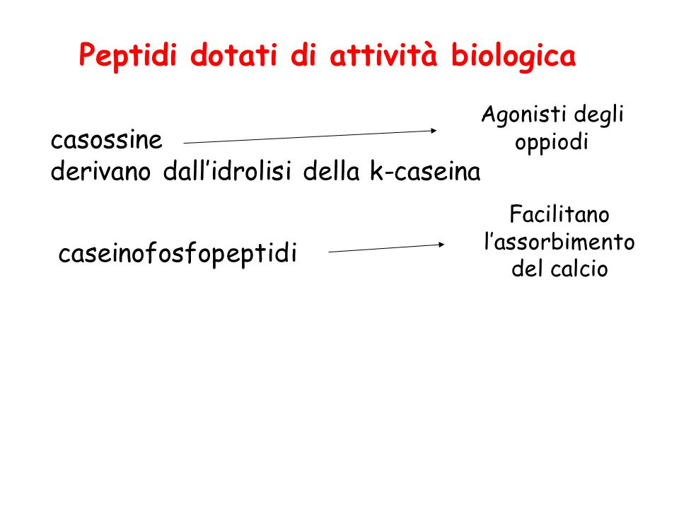 Peptidi dotati di attività biologica casossine derivano dall'idrolisi della k-caseina Agonisti degli oppiodi caseinofosfopeptidi Facilitano l'assorbim
