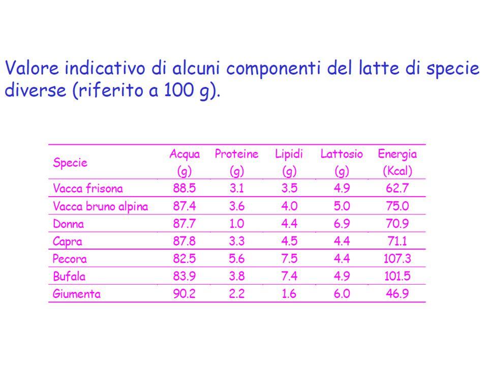 Composizione del latte vaccino: protidi 94% azoto proteico (80% Caseine e 20 % sieroproteine) 6% azoto non proteico (urea, NH3, nucleobasi, creatina, creatinina)