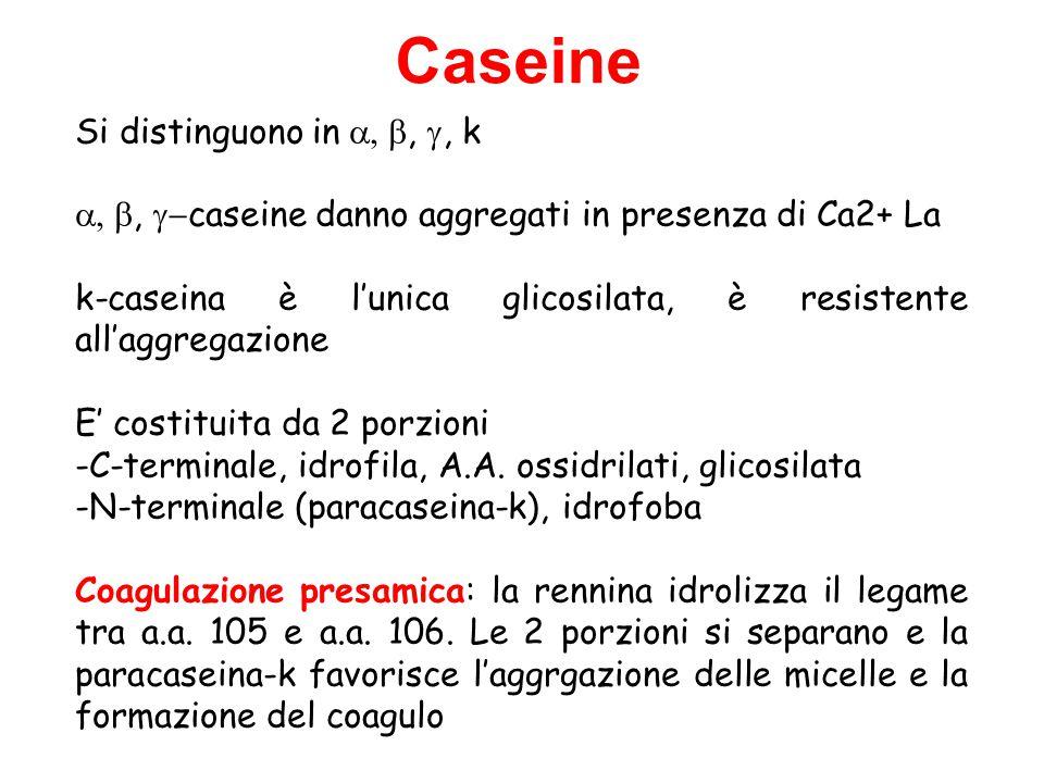 Si distinguono in , , k ,  caseine danno aggregati in presenza di Ca2+ La k-caseina è l'unica glicosilata, è resistente all'aggregazione E