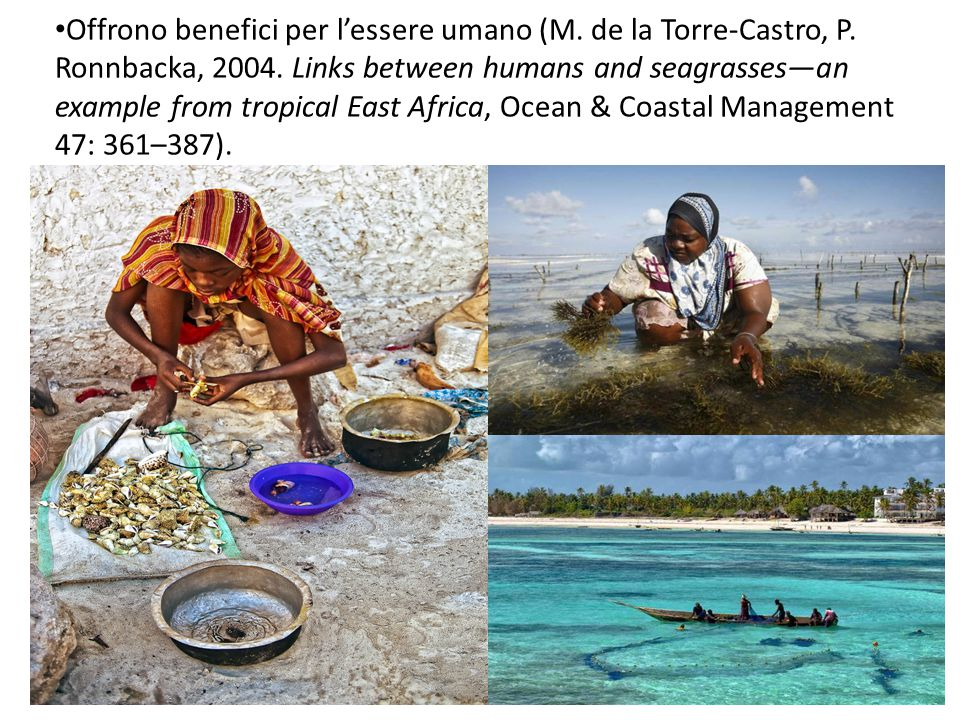 Offrono benefici per l'essere umano (M. de la Torre-Castro, P. Ronnbacka, 2004. Links between humans and seagrasses—an example from tropical East Afri