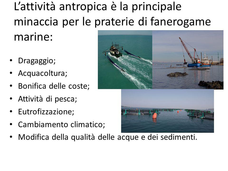 L'attività antropica è la principale minaccia per le praterie di fanerogame marine: Dragaggio; Acquacoltura; Bonifica delle coste; Attività di pesca;