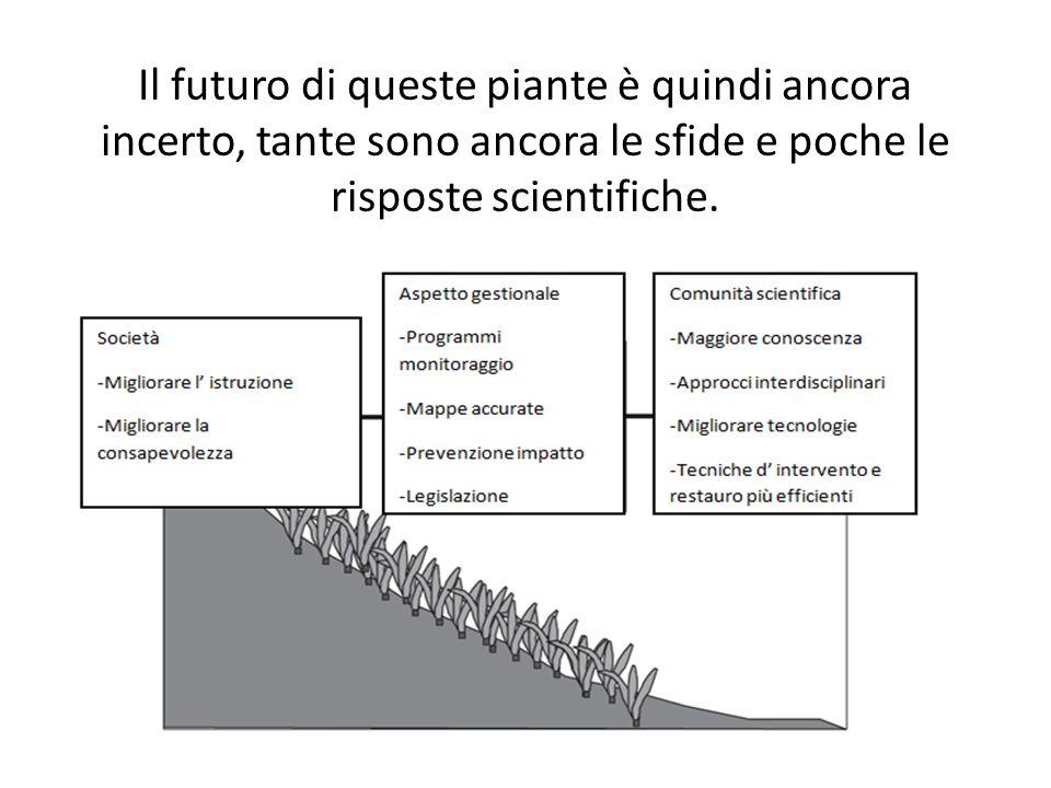 Il futuro di queste piante è quindi ancora incerto, tante sono ancora le sfide e poche le risposte scientifiche.