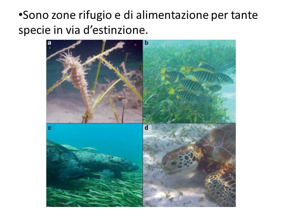 Sono zone rifugio e di alimentazione per tante specie in via d'estinzione.
