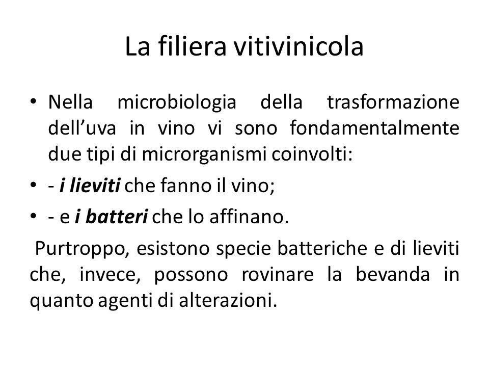 La filiera vitivinicola Nella microbiologia della trasformazione dell'uva in vino vi sono fondamentalmente due tipi di microrganismi coinvolti: - i li
