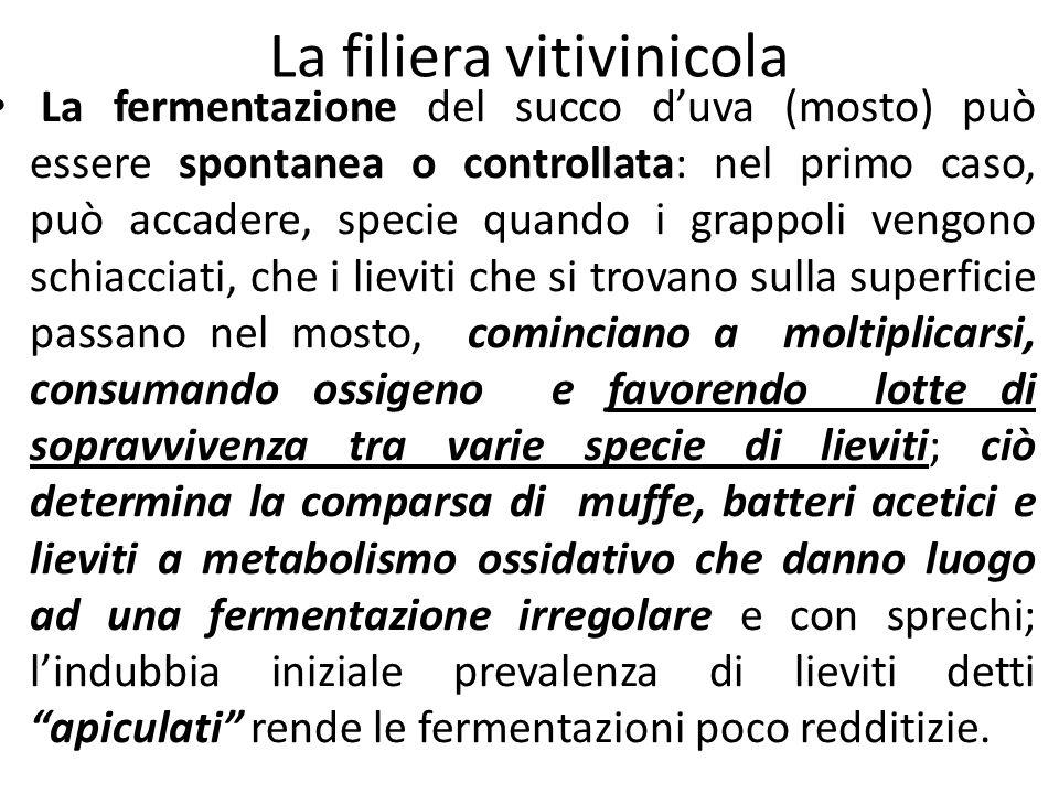La filiera vitivinicola La fermentazione del succo d'uva (mosto) può essere spontanea o controllata: nel primo caso, può accadere, specie quando i gra