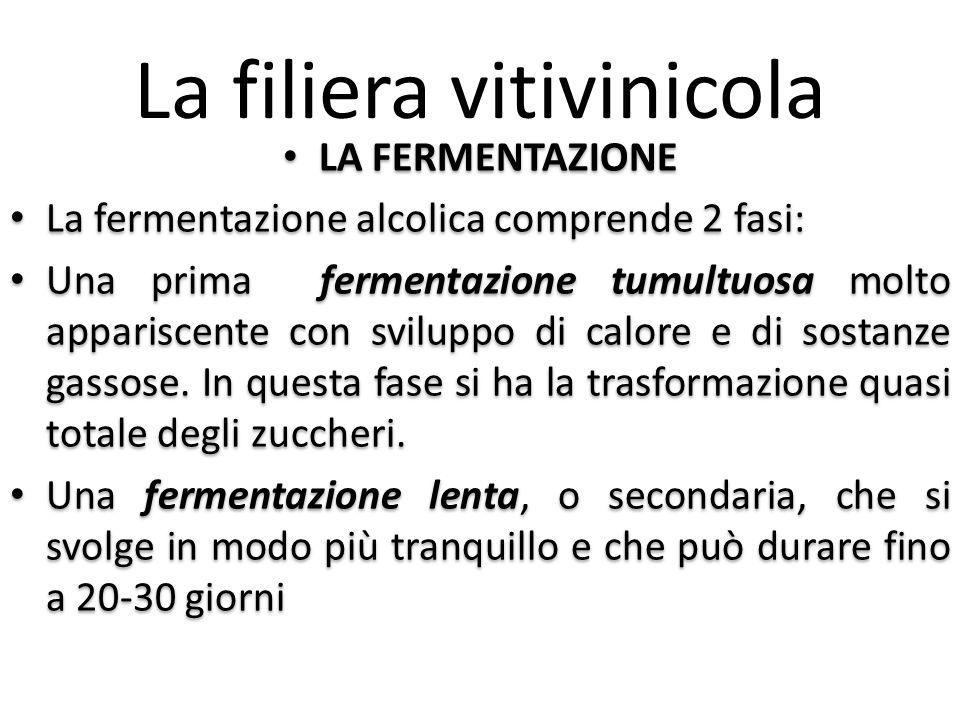 La filiera vitivinicola LA FERMENTAZIONE La fermentazione alcolica comprende 2 fasi: Una prima fermentazione tumultuosa molto appariscente con svilupp