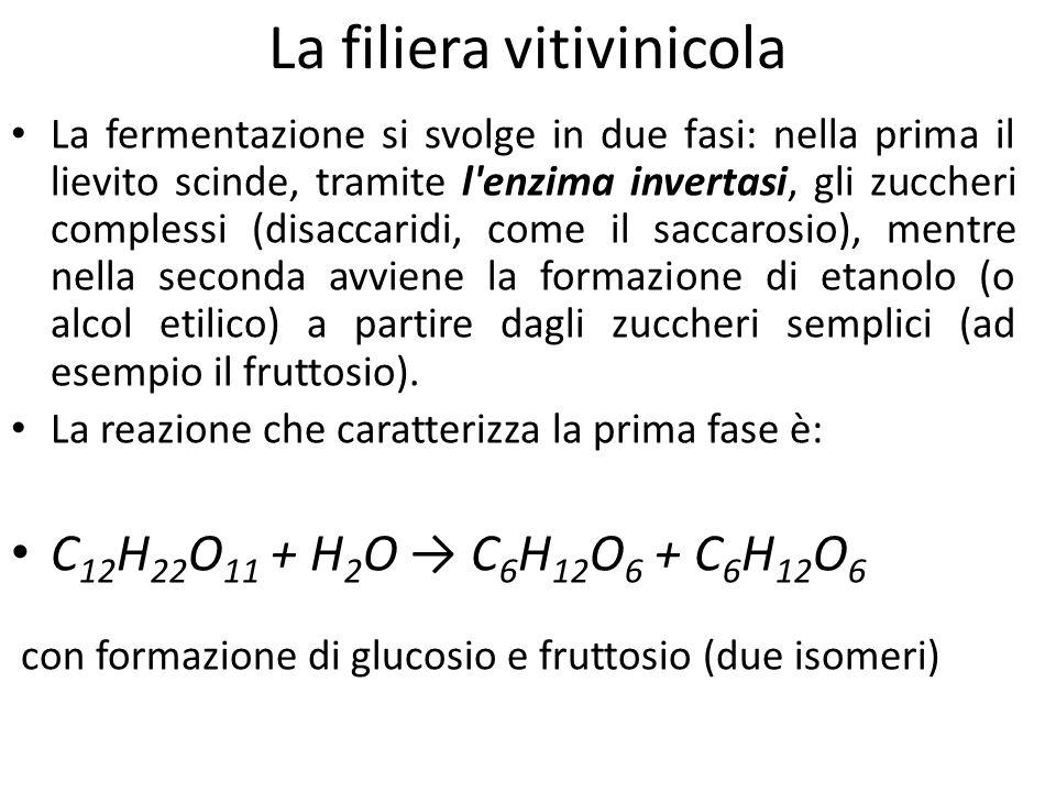La filiera vitivinicola La fermentazione si svolge in due fasi: nella prima il lievito scinde, tramite l'enzima invertasi, gli zuccheri complessi (dis