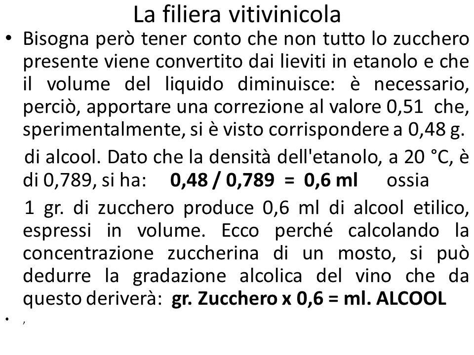 La filiera vitivinicola Bisogna però tener conto che non tutto lo zucchero presente viene convertito dai lieviti in etanolo e che il volume del liquid