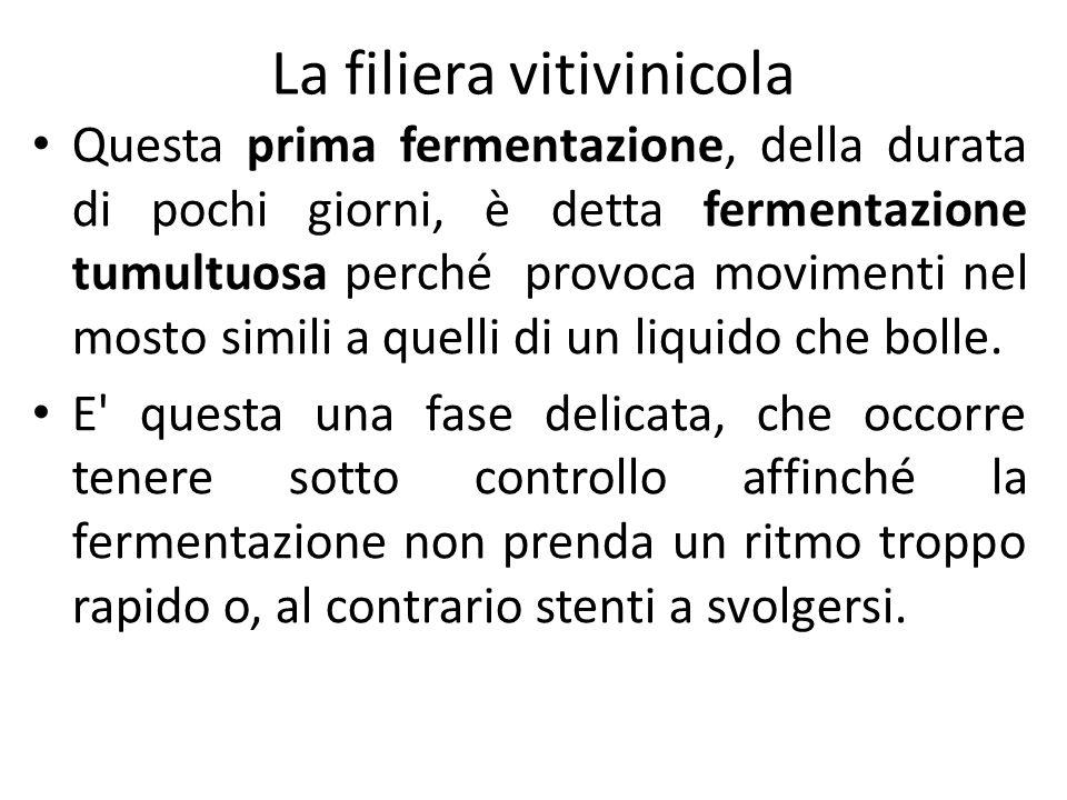 La filiera vitivinicola Questa prima fermentazione, della durata di pochi giorni, è detta fermentazione tumultuosa perché provoca movimenti nel mosto